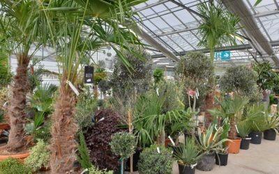 Grand arrivage de plantes méditerranéennes